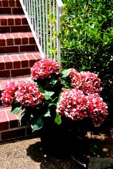 Flowers, TN